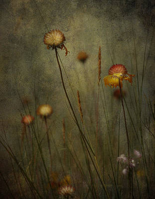 Baby Carriages Photograph - Wild Beauty  by Empty Wall