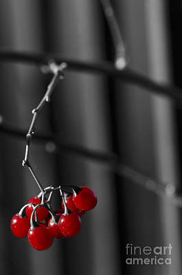 Photograph - Wild Berries by JT Lewis