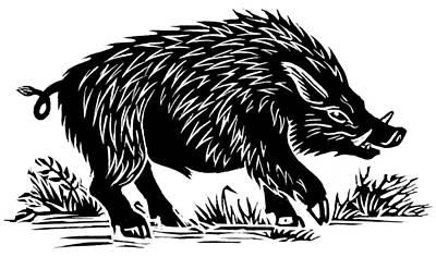 Wild Boar, Woodcut Art Print by Gary Hincks
