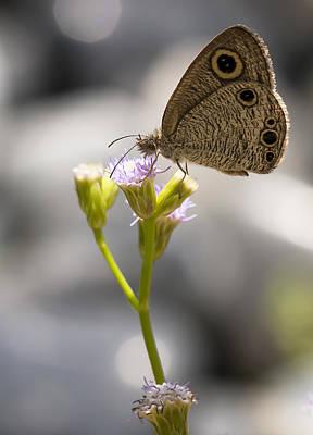 Photograph - Wild Butterfly by Zoe Ferrie