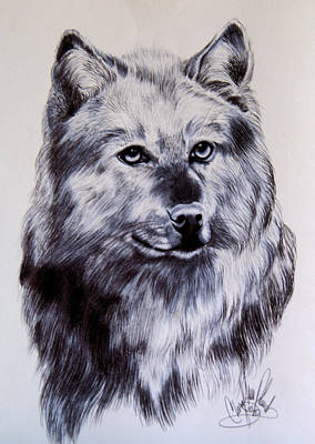 Drawing - Wild Canines by Cheryl Poland