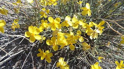 Art Print featuring the photograph Wild Desert Flowers by Kume Bryant