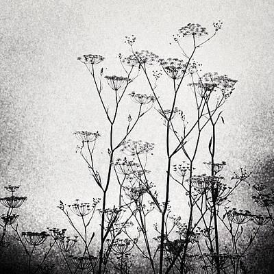 Wild Fennel #fennel Art Print by Denise Taylor