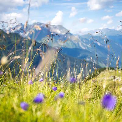 Y120831 Photograph - Wild Flower And Grass by Torsten Muehlbacher