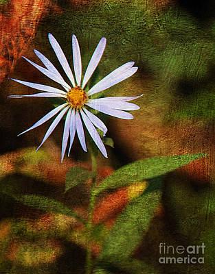 Wild Flower Art Print by Billie-Jo Miller