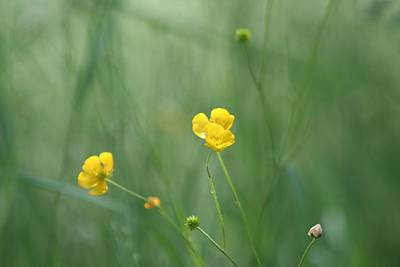 Garden Photograph - Wild Flowers by Andreea Marian