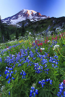 Wild Flowers In The Rainier National Park Print by Gavriel Jecan