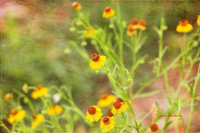 Art Print featuring the photograph Wild Flowers by Joan Bertucci