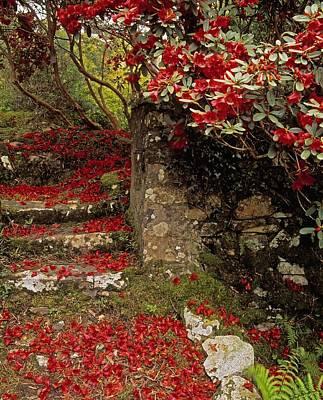 Down In The Garden Photograph - Wild Garden, Rowallane Garden, Co Down by The Irish Image Collection