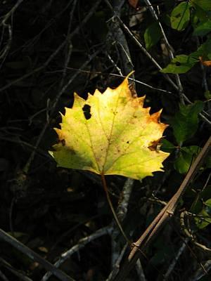 Wild Grape Leaf Shadows Original