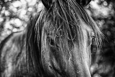 Forelock Photograph - Wild Hair by Toni Hopper