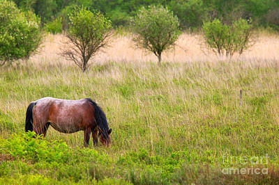 Wild Horse Grazing Art Print by Richard Thomas