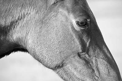 Wild Horse Intimate Art Print