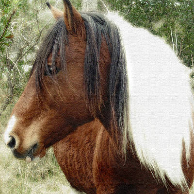 Photograph - Wild Horse by Marilyn Marchant