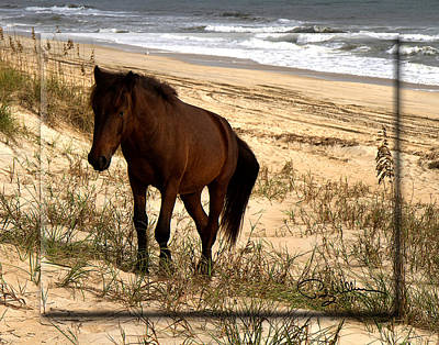Photograph - Wild Horse On Beach by Trudy Wilkerson