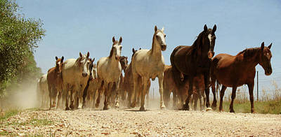Wild Horses Art Print by Antonio Arcos Aka Fotonstudio Photography