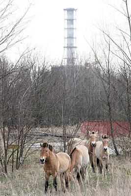 Wild Horses Near Chernobyl Art Print by Ria Novosti