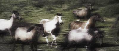 Wild Horses On The Move Art Print