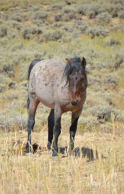 Photograph - Wild Horses Wyoming - The Mare II  by Donna Greene