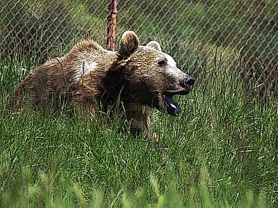 Wild Life Safari Bear Art Print