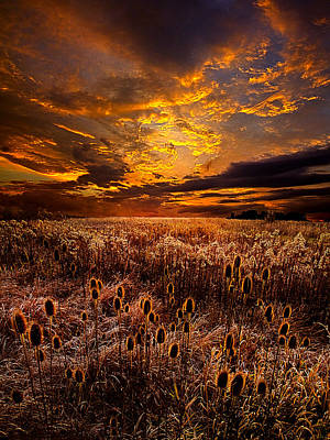 Spring Poster Photograph - Wild Light by Phil Koch