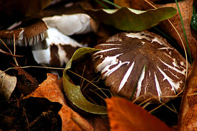 Mushroom Photograph - Wild Mushroom by LeeAnn McLaneGoetz McLaneGoetzStudioLLCcom
