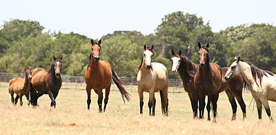 Photograph - Wild Mustang Band by Elizabeth Hart