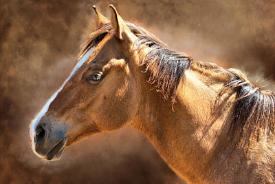 Wild Mustang Art Print by Mary Almond