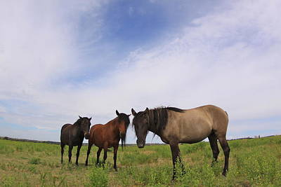 Photograph - Wild Mustangs On The High Plains by Kate Purdy