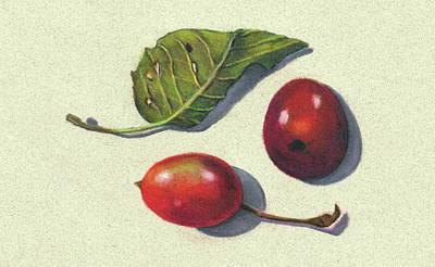 Still Life Drawings - Wild Plums and Leaf by Joyce Geleynse
