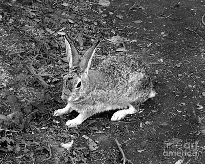 Photograph - Wild Rabbit Photograph by Kristen Fox