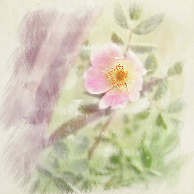Photograph - Wild Rose by Richard Piper