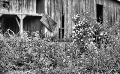 Photograph - Wild Roses Bw by JC Findley