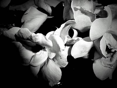 Wild Roses In Black And White Art Print by Beth Akerman