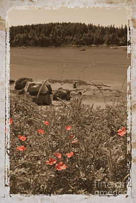 Wild Roses Art Print by Jim Wright
