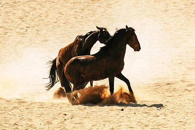Photograph - Wild Stallion Clash 3 by Alistair Lyne