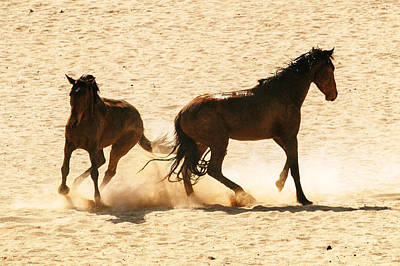 Photograph - Wild Stallion Clash by Alistair Lyne
