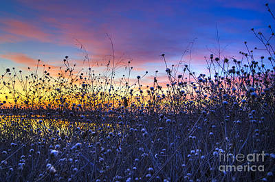 Photograph - Wild Sunset by Jim And Emily Bush