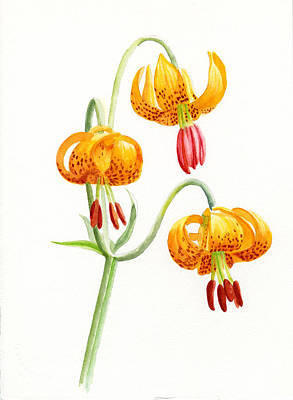 Wild Tiger Lilies Art Print by Sharon Freeman