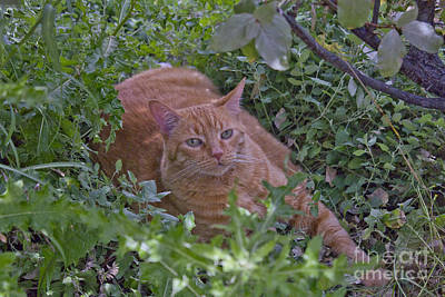 Photograph - Wildcat2 by Donna L Munro