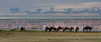 Photograph - Wildebeest And Flamingos by Joe Bonita