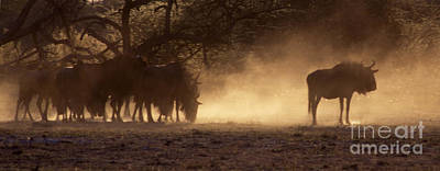 Photograph - Wildebeests In The Dust - Botswana by Craig Lovell