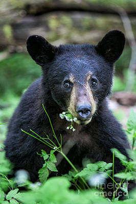 Photograph - Wildflower Bear by Ronald Lutz