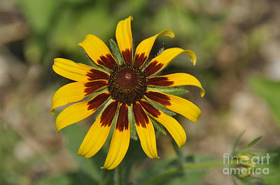 Photograph - Wildflower by Cheryl McClure