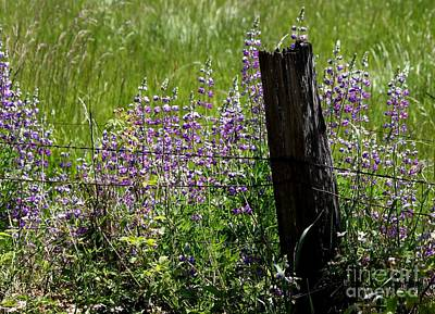 Photograph - Wildflower Fence by Erica Hanel