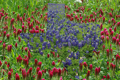 Crimson Clover Photograph - Wildflower Illusions by Robyn Stacey
