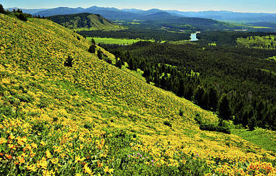 Wildflower Mountain In Wyoming Art Print by Jeff R Clow