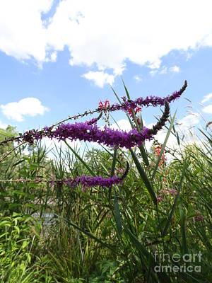 Photograph - Wildflower Sky by Laurel Best