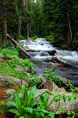 Photograph - Wildflower Stream by Rex E Ater
