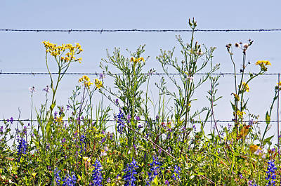 Photograph - Wildflowers And Barbed Wire by Teresa Blanton